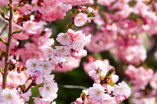 Romantic spring VI