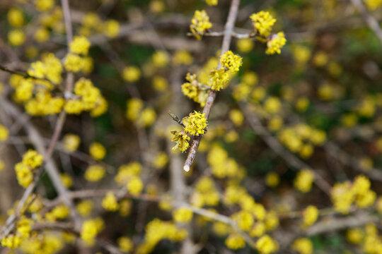yellow spring II