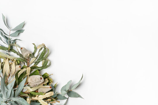 Beautiful flat lay floral arrangement of Australian natives Banksias and Eucalyptus leaves on a white background. Room for text or copy.
