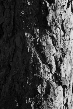 texture of a bark of tree. Abstract txture of a bark of tree