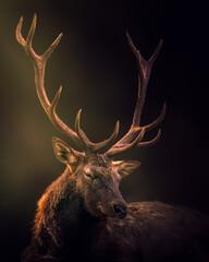 Beautiful deer on a dark background