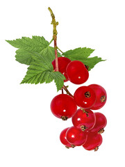 Fototapete - Currant isolated on white background