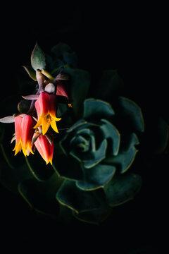 Details of a suculent flower