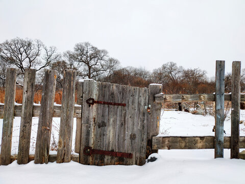 Old abandoned wooden fence against the background of a winter forest. Remains of a wooden fence around an abandoned vegetable garden in the countryside