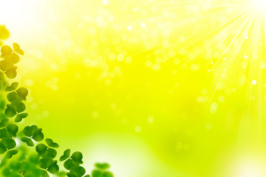 green clover leaves. natural background.