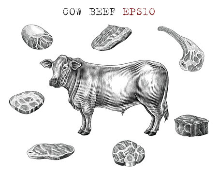 Cow beef set hand draw vintage engraving style black and white clip art isolated on white background