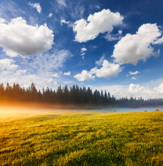Wall Mural - Misty morning pasture in the sunlight. Locations place Durmitor National park, village Zabljak, Montenegro.