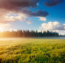 Wall Mural - Misty morning pasture in the sunlight. Locations place Durmitor National park, Montenegro.