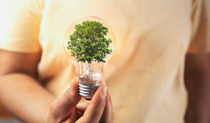 hand holding lightbulb with tree insite. concept eco energy inovation