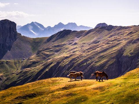 Caballos pastando en los prados de verano de las montañas del Pirineo