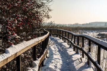 Kładka wśród bagien w Narwiańskim Parku Narodowym, Podlasie, Polska
