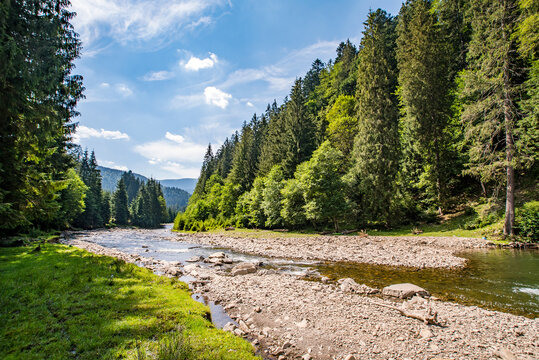 mountain river near the coniferous forest on a background of mountains and blue sky.