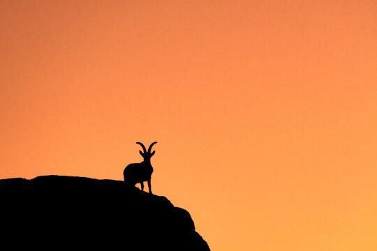 Silueta de cabra montés al atardecer - Torcal de Antequera