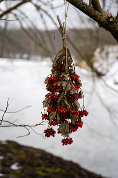 bouquet of red berry bush hanging on a tree