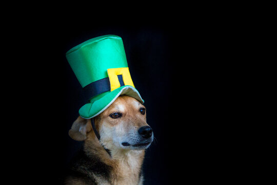 portrait of a mongrel dog with st patricks day hat