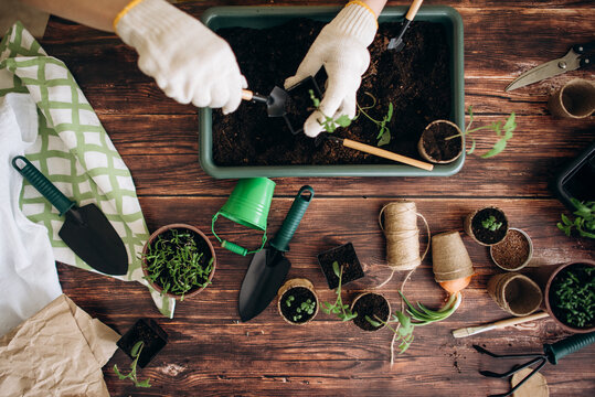 Female hands plant eco vegetable seeds. Gardening. Seedling