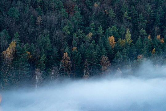 Densely forested hill slope covered by lush autumn foliage shrouded in a dense fog