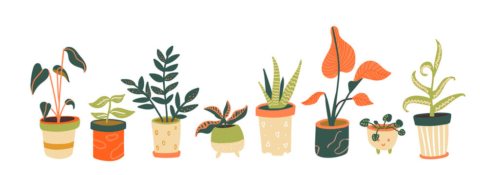 Houseplants collection. Different indoor plants in pots. Aloe, tropical trees, pilea. Trendy home decor, urban jungle horizontal banner.