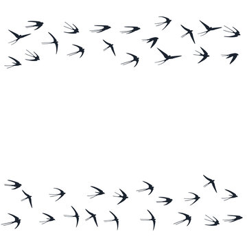 Flying swallow birds silhouettes vector illustration. Migratory martlets bevy isolated on white.