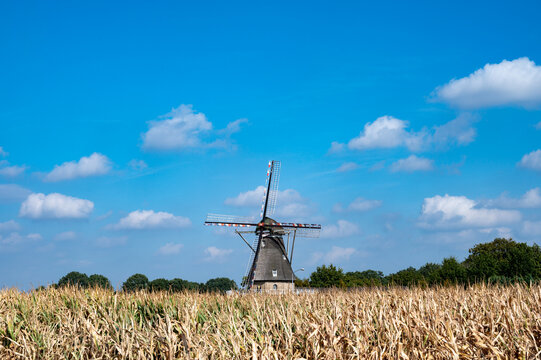 View on grain wind mill in Veldhoven and farmer field with ripe yellow corn ready to harvest