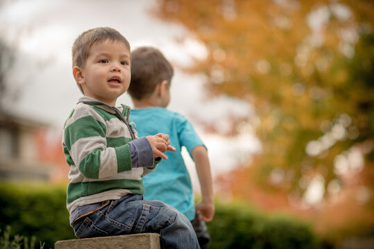 Mixed race brothers play together in the yard of their suburban Sydney home with autumn trees