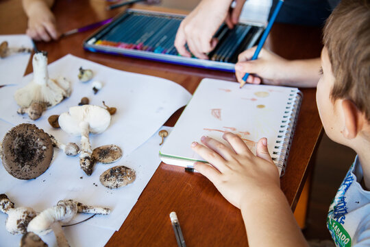 Boys drawing art of fungi and toadstools for home school education
