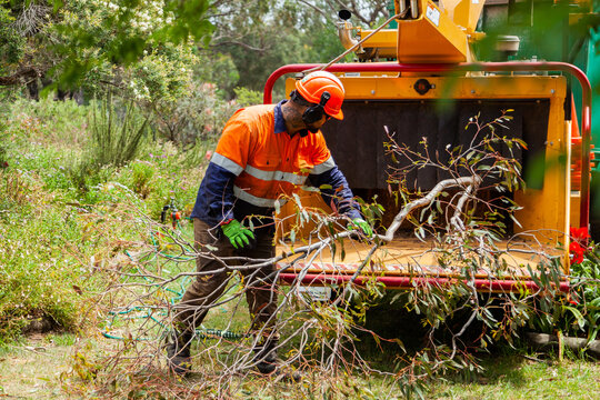Tradie feeding branches into wood chipping machine