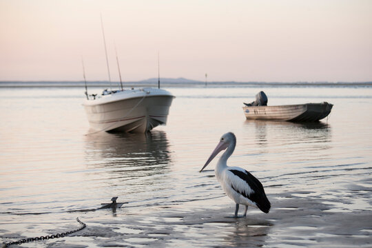 Boats and pelican on the water at Seventeen Seventy, Queensland