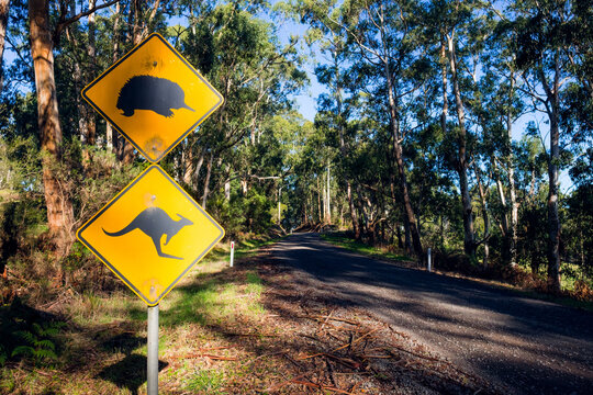 Wildlife caution signs on country road