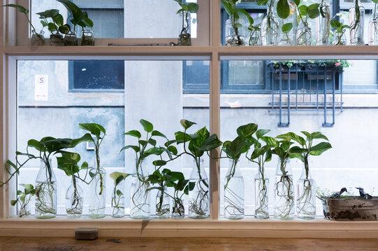 Plants in glass bottles on windowsill