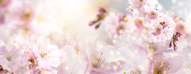 Fototapeta Spring Nature Easter art background with blossom. Beautiful nature scene with blooming flowers tree.and sun flare. Sunny day. Spring flowers. Beautiful Orchard. Abstract blurred background. Springtime