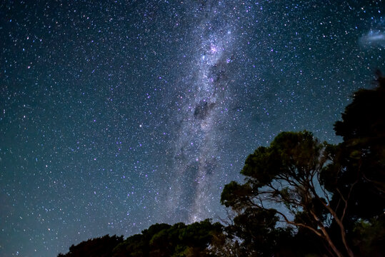 Starry sky with milky way above shape of trees in Abel Tasman National Park, New Zealand
