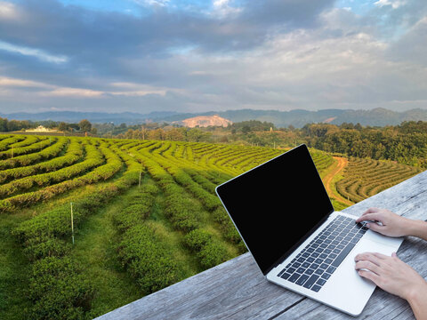 Hand typing laptop on wooden table over tea field background.