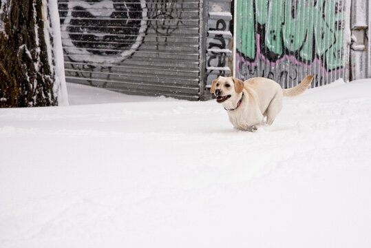Happy dog running on the snow