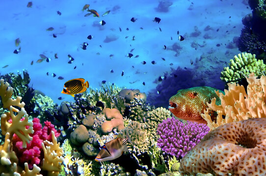 Colorful Coral Reef At The Bottom Of Tropical Sea. Red Sea