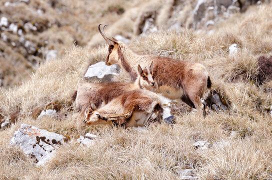 View Of Deer Relaxing On Field