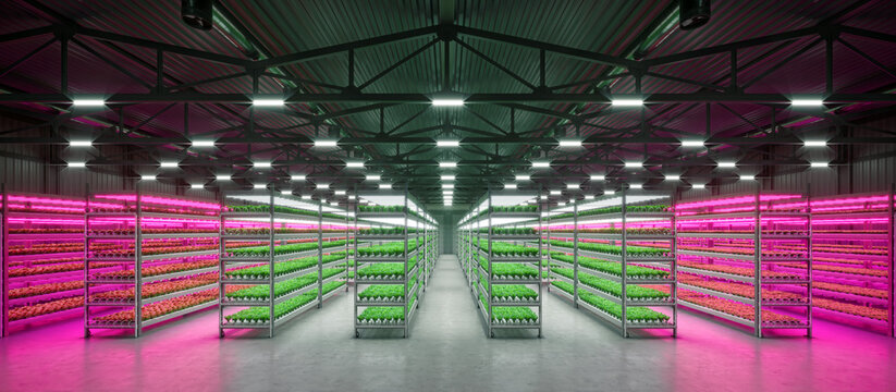 Hydroponic indoor vegetable plant factory in exhibition space warehouse. Interior of the farm hydroponics. Green salad farm in hydroponics. Lettuce Roman with led lightning. Concrete floor. 3D render