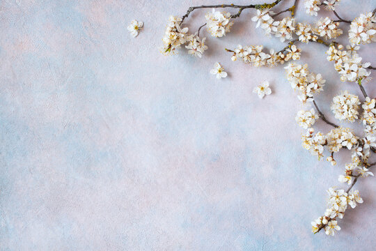 Decorative colored background with flowering cherry plum branches, spring, space for text