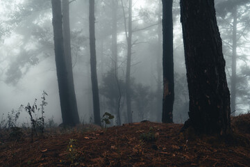 Fog and trees in the tropical forest