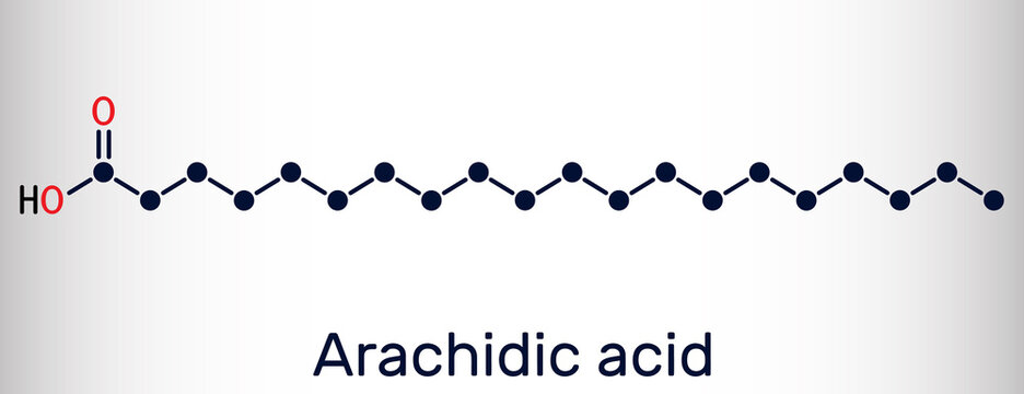 Arachidic acid, eicosanoic, icosanoic acid molecule. It is saturated long-chain fatty acid. Skeletal chemical formula
