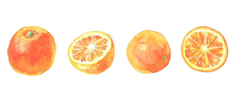 水彩で描いたオレンジのイラスト