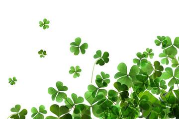 Fresh green clover leaves on white background. St. Patrick's Day