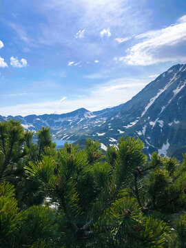 Green trees in the Tatra National Park, winter mountains in the backgroun