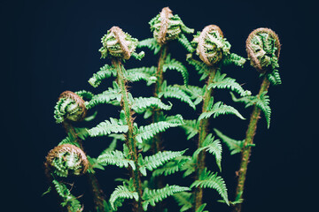 Green fern leaves Botany and green backgrounds Concept of naturale and organic products