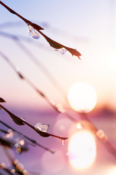 Spring tree branch against blurred sunset sky background