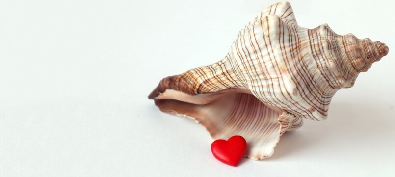 Banner : a large seashell with a red heart on a white background, space for text