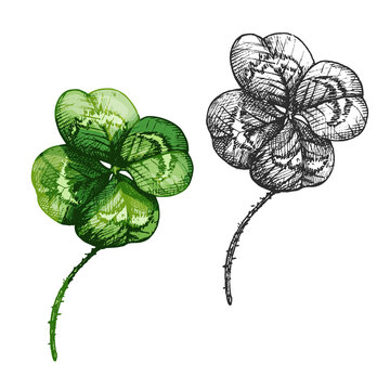 Good luck four leaf clover. Vector color vintage hatching illustration isolated