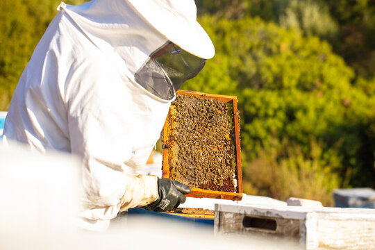 Bee keeper removing rack outside of hive. organic honey and beekeeping concept