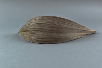 Obraz Duży, suchy, uschły liść na szarym tle. - fototapety do salonu