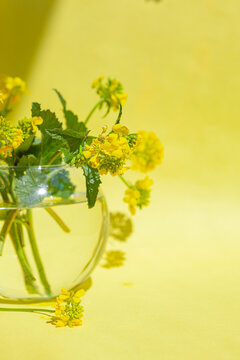 Sinapis arvensis, mustard spring yellow blossom against in a glass vase with water drops. Bouquet of sinapis arvensis on a yellow background. With space for your text-image